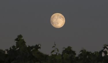 Ancien Moonrise Dinner in the Vineyard